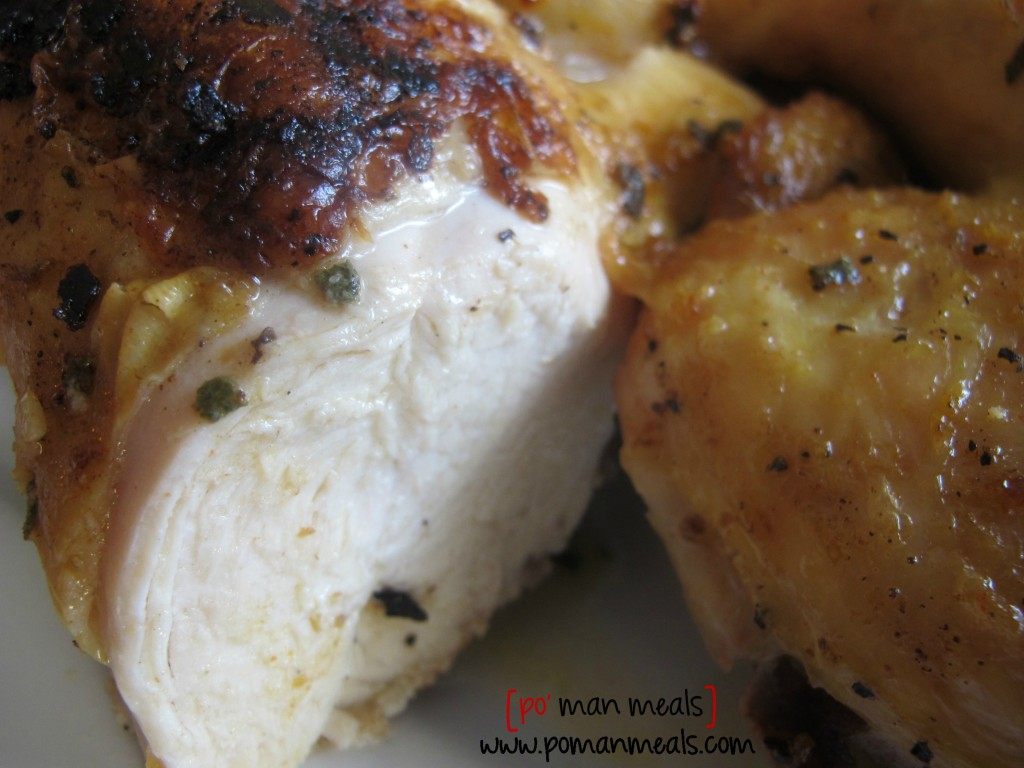 chicken-closeupwm